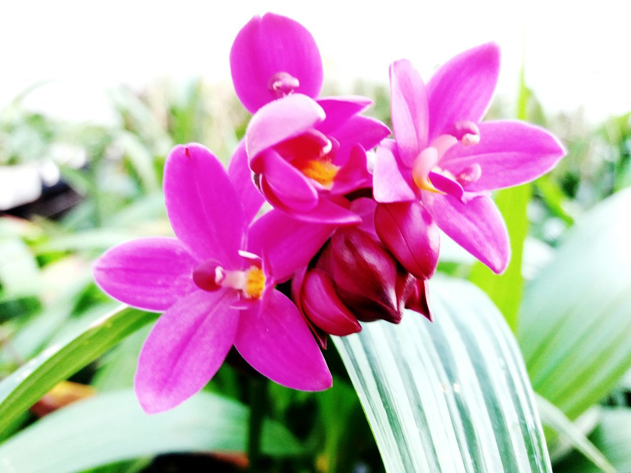 Pink Color Flower Day Orchid Focus On Foreground Nature Petal No People Close-up Outdoors Beauty In Nature Fragility Plant Flower Head Freshness Water Orchid Flower Nature Orchid Orchids In Bloom Orchidslover Orchids Collection Flowerbed Orchids