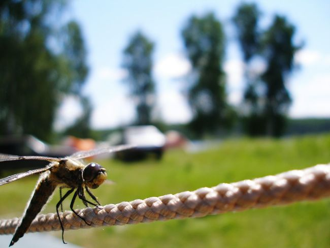 Nature Nature Photography Macro Macro Nature Macro Insects Chelyabinsk Region