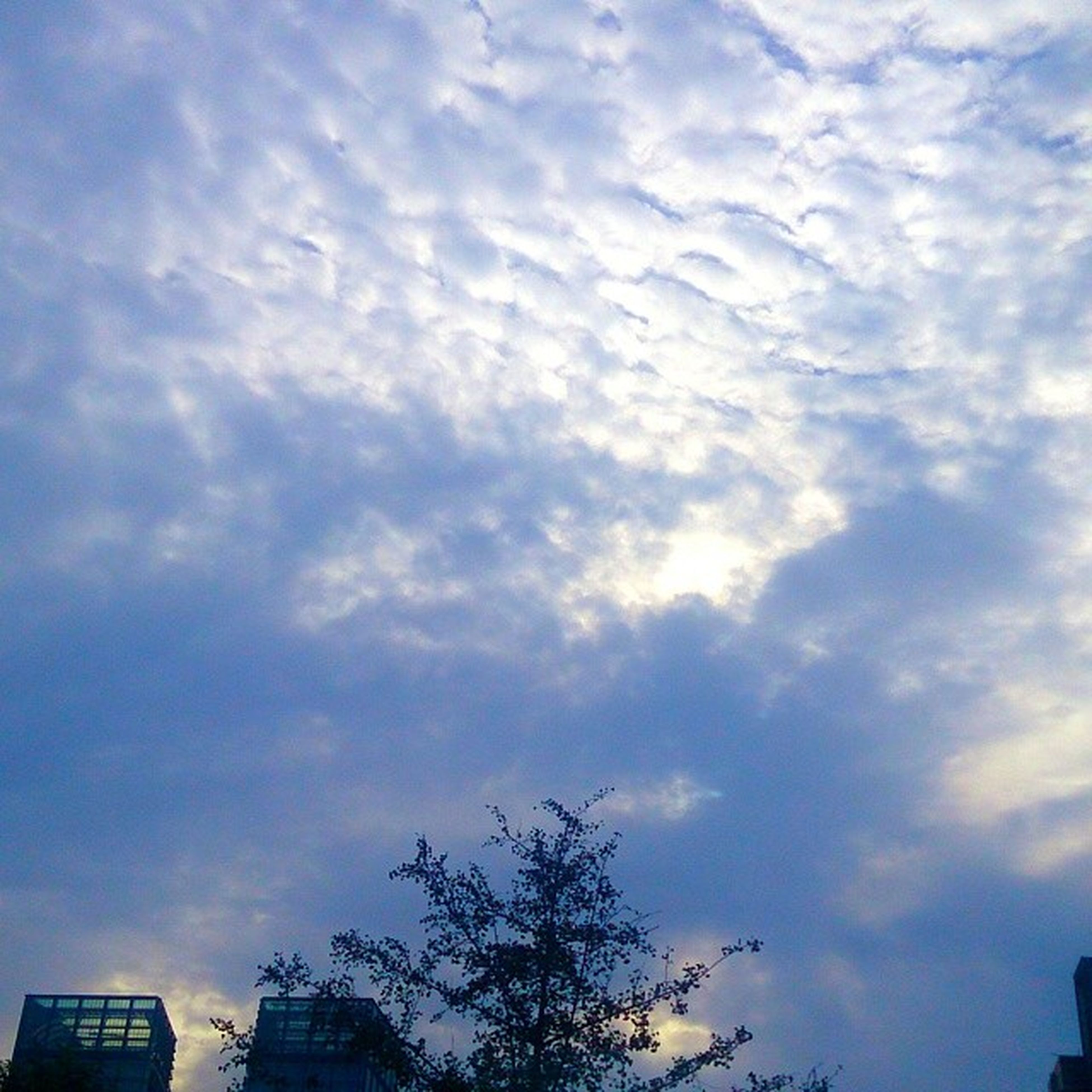 sky, low angle view, cloud - sky, cloudy, building exterior, tree, cloud, built structure, architecture, high section, nature, outdoors, silhouette, beauty in nature, blue, no people, weather, day, scenics, building