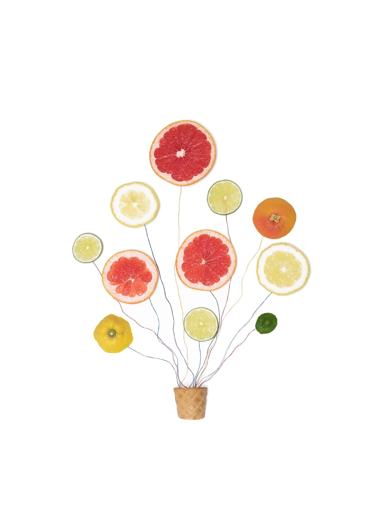 White Background Variation Fruit Food And Drink Grapefruit No People Studio Shot Healthy Eating Directly Above Citrus Fruit Freshness Food Indoors  Close-up Blood Orange Day Copy Space Negative Space