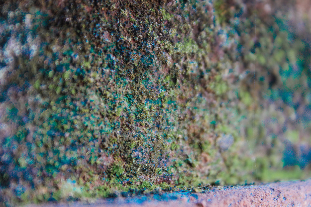 Beautiful moss Backgrounds Green Color Multi Colored Nature Nature Nature Photography Nature_collection Outdoors Textured  Vintage Vintage Photo
