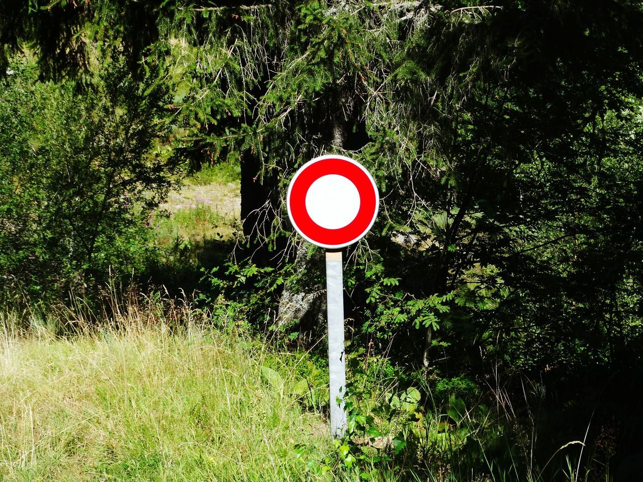 WTF? Forbidden Road Sign Roadsign Roadsign In A Forest Outdoors France Circle Red Circle White Circle Lollipop From My Point Of View Check This Out France Photos Auvergne