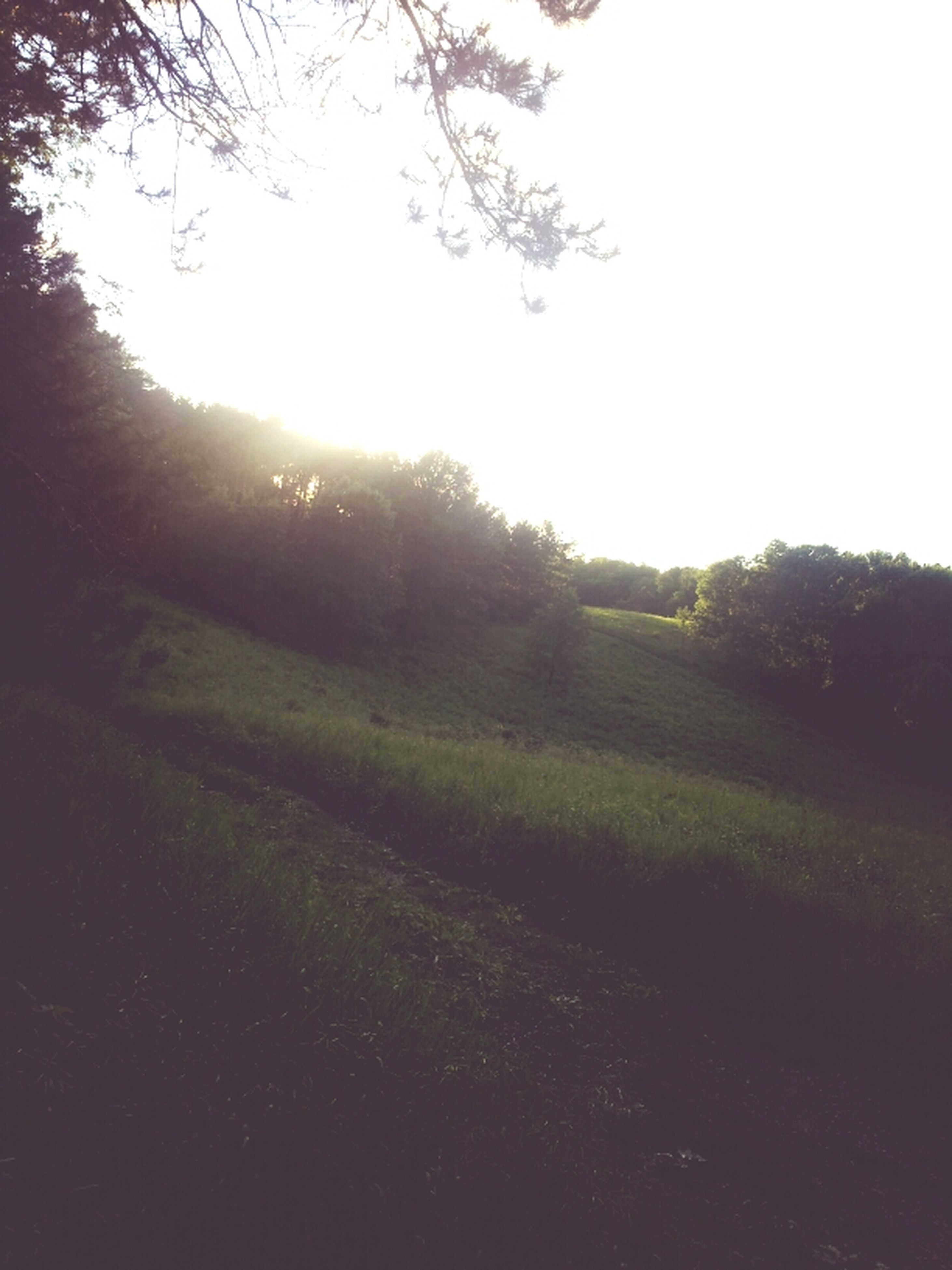 sun, tree, tranquility, sunlight, tranquil scene, lens flare, sunbeam, clear sky, field, beauty in nature, nature, growth, landscape, grass, scenics, sunset, sky, silhouette, grassy, no people