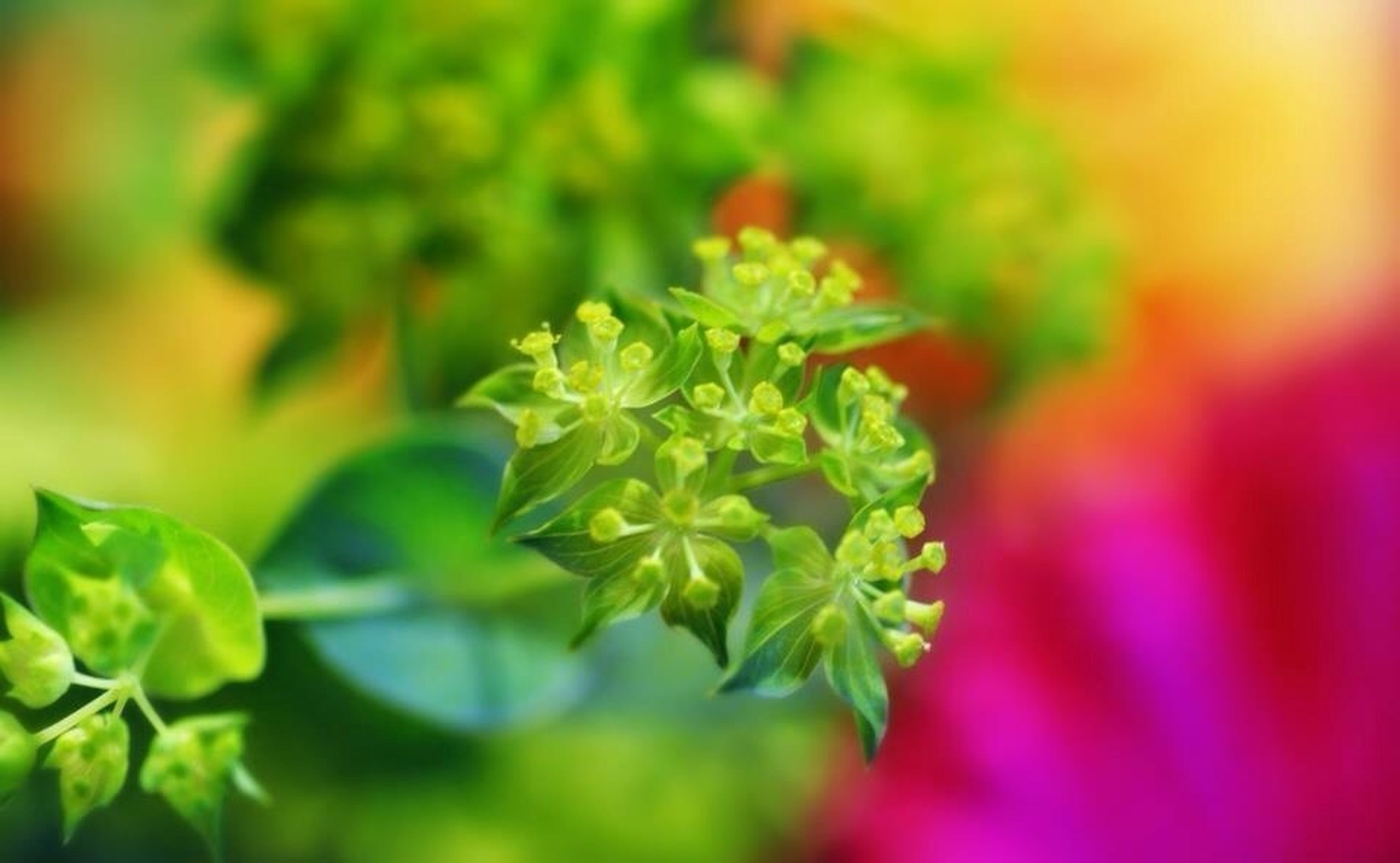 flower, freshness, growth, fragility, petal, beauty in nature, close-up, plant, focus on foreground, selective focus, nature, flower head, blooming, green color, leaf, bud, in bloom, stem, park - man made space, botany
