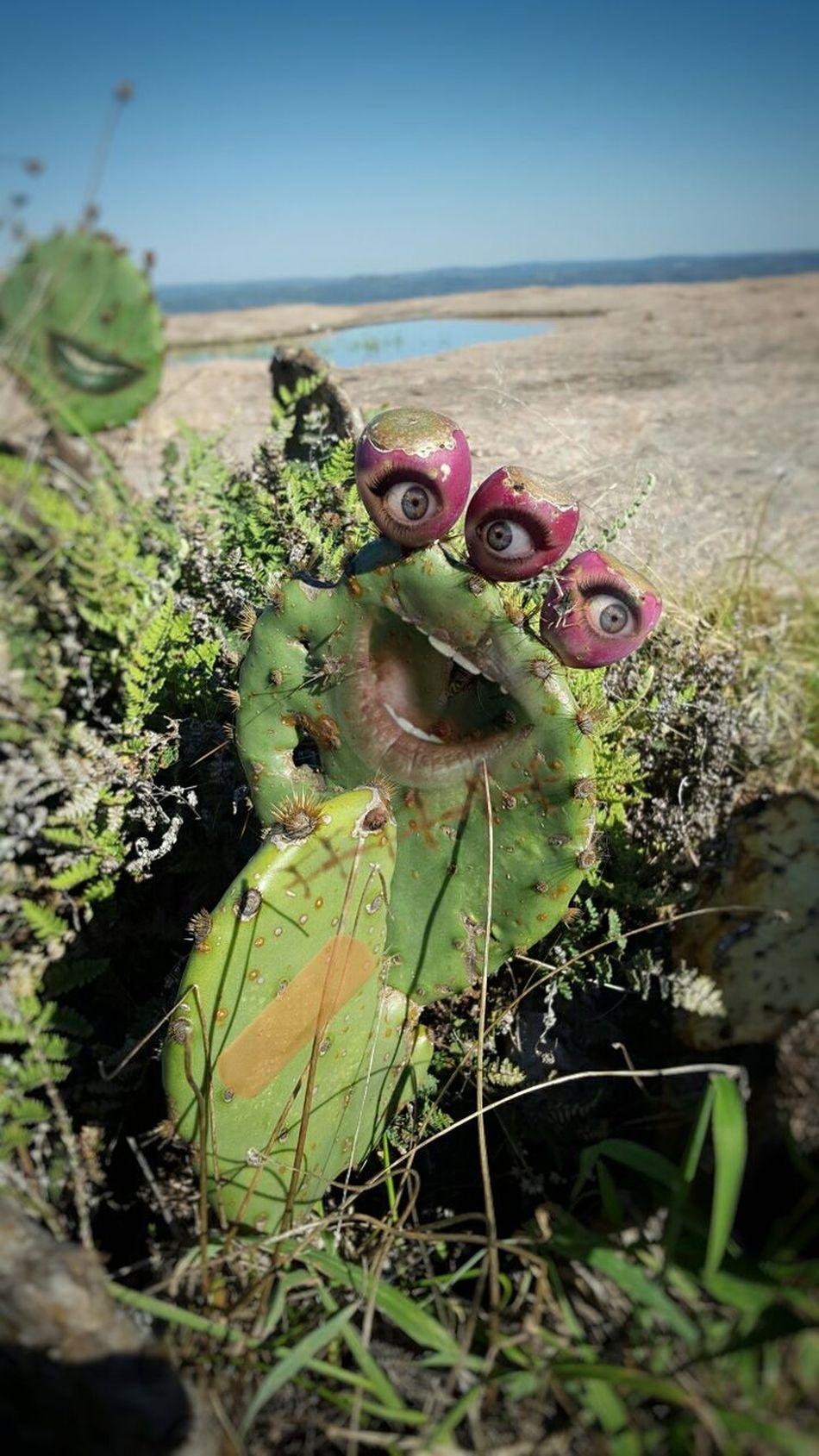 Outdoors Nature Close-up Weirdart Weirdface Weird Art Strange Cactus Surrealist Art Mysterious Weird Noirphoto Strange Things