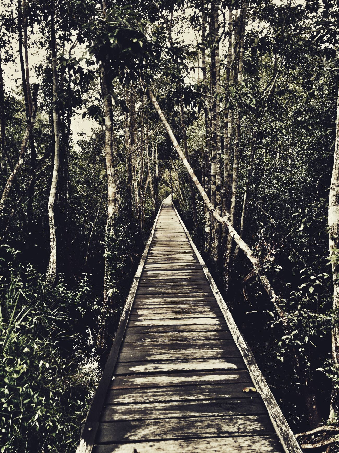 The Secret Spaces Efficient jungle pathing The Journey Is The Destination CentralBorneo Jungle Jungle Trekking Kalimantan Kalimantantengah Pangkalanbun Tanjungputing Tanjung Puting National Park INDONESIA Neighborhood Map Neighborhood Map The Great Outdoors - 2017 EyeEm Awards The Great Outdoors - 2017 EyeEm Awards