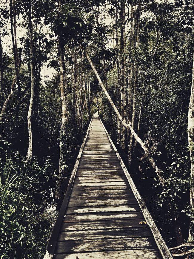 Efficient jungle pathing The Journey Is The Destination CentralBorneo Jungle Jungle Trekking Kalimantan Kalimantantengah Pangkalanbun Tanjungputing Tanjung Puting National Park INDONESIA