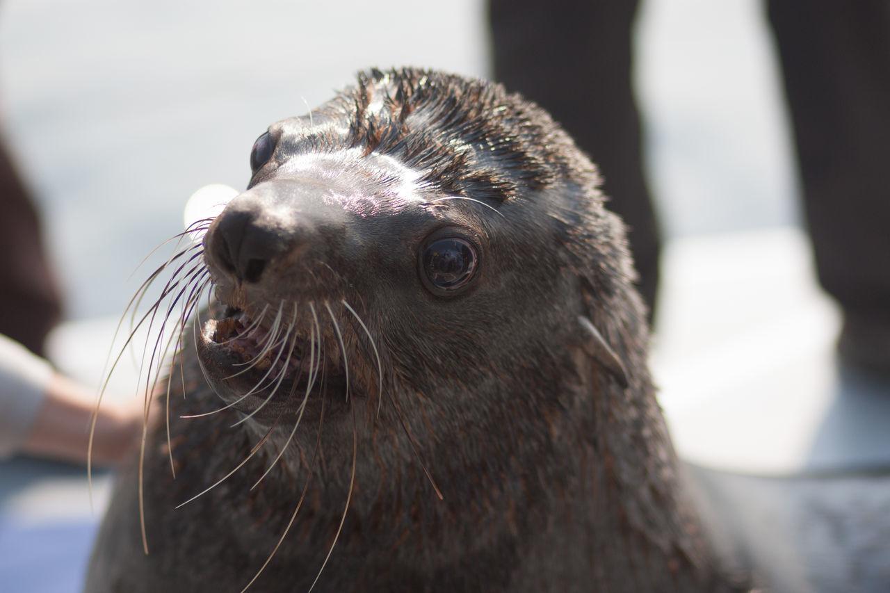 Beautiful stock photos of funny animal, Animal Head, Animal Themes, Boat, Day