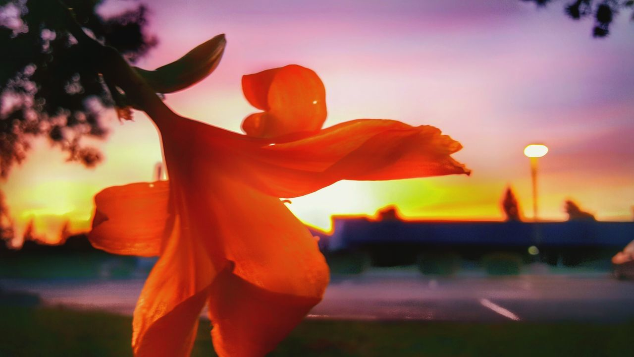 Sunset After The Rain Sky Dramatic Perspective Perspective Focus Point Freshness Beauty In Nature Flower Creative Blur Wet Illuminated Creative Use Of Light Bokeh Photography Refraction Cwpearcygerman