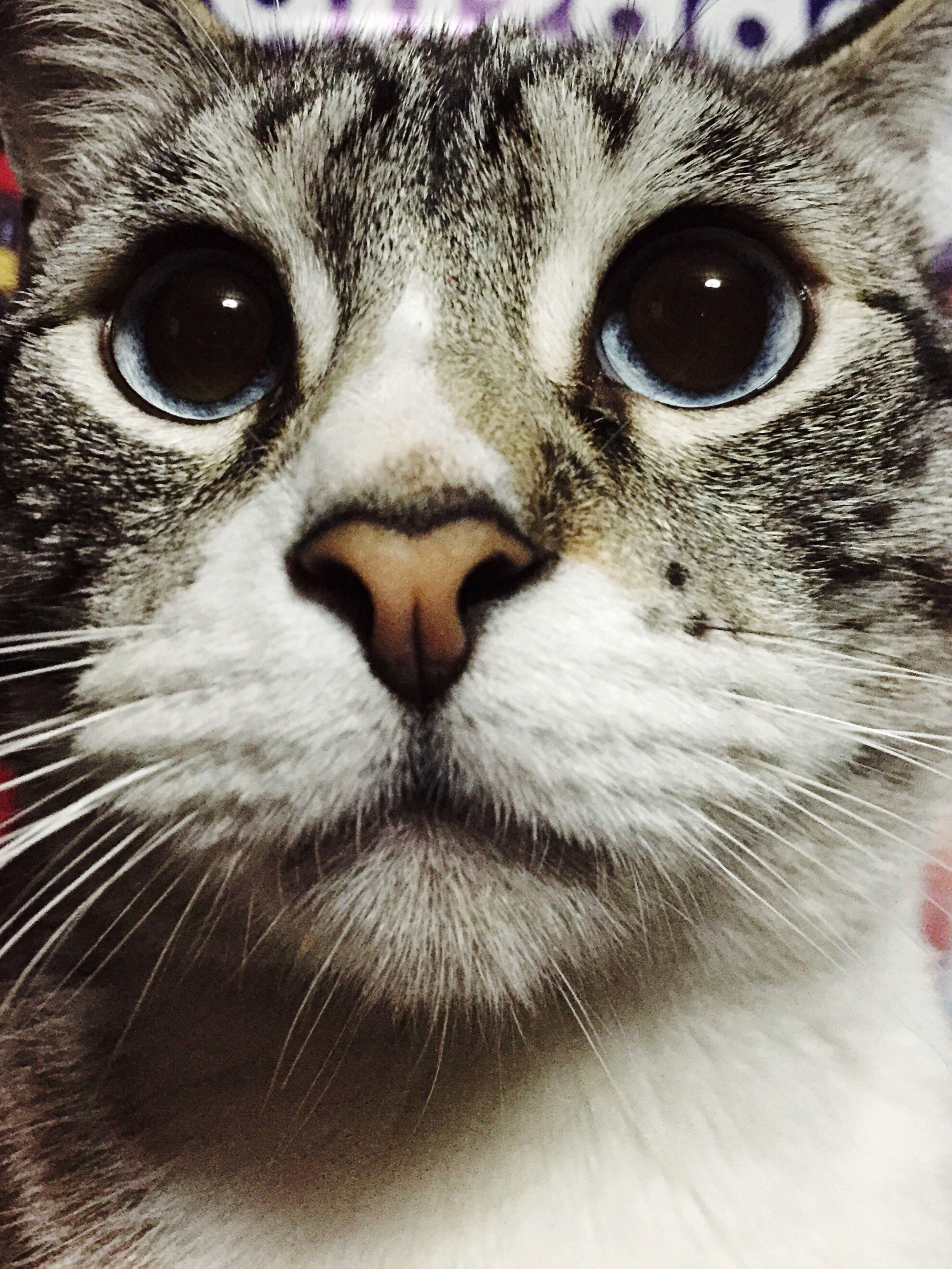 Parece que vi un lindo gatito First Eyeem Photo