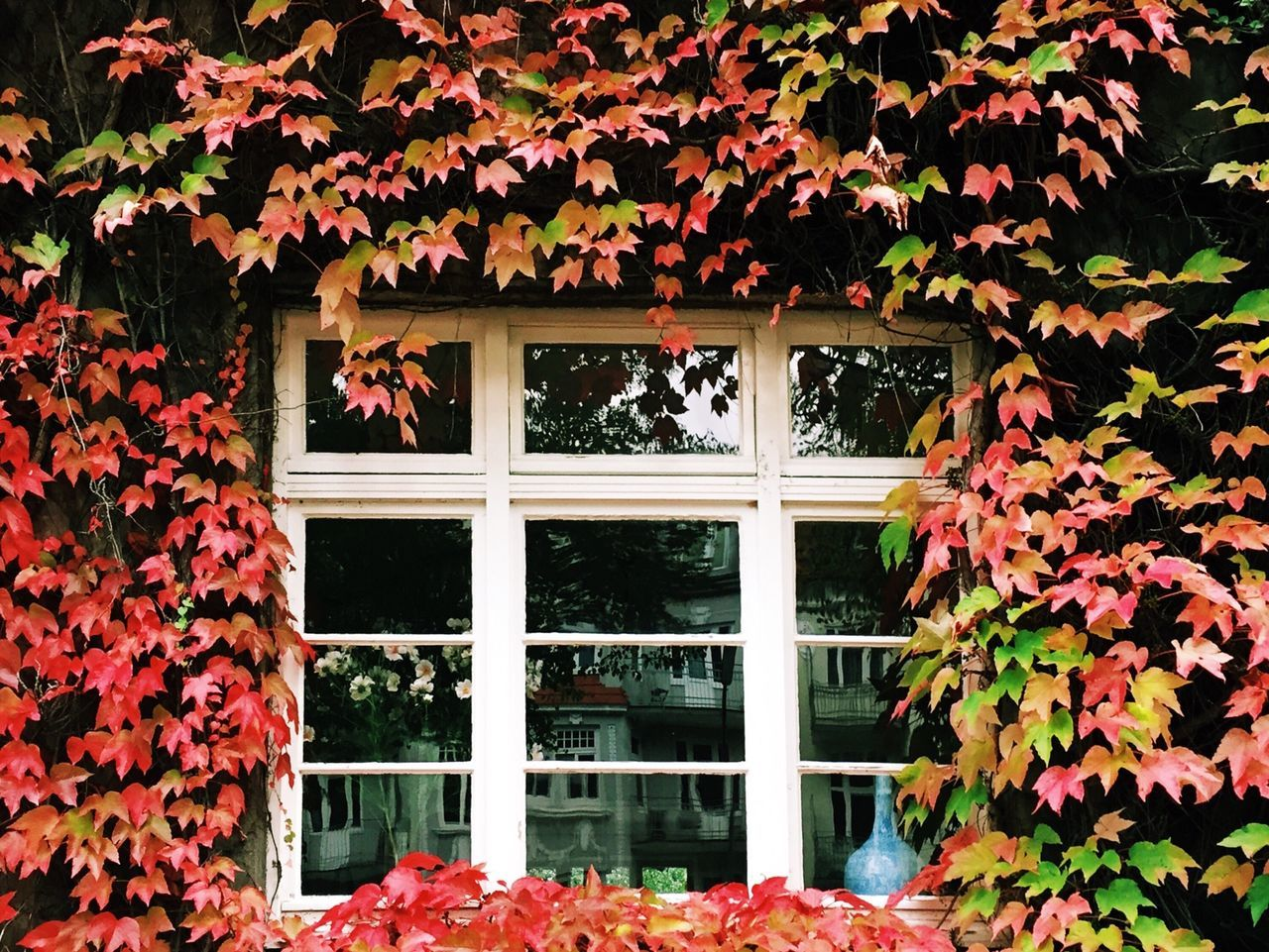 Beautiful stock photos of house, Autumn, Built Structure, Creeper Plant, Day