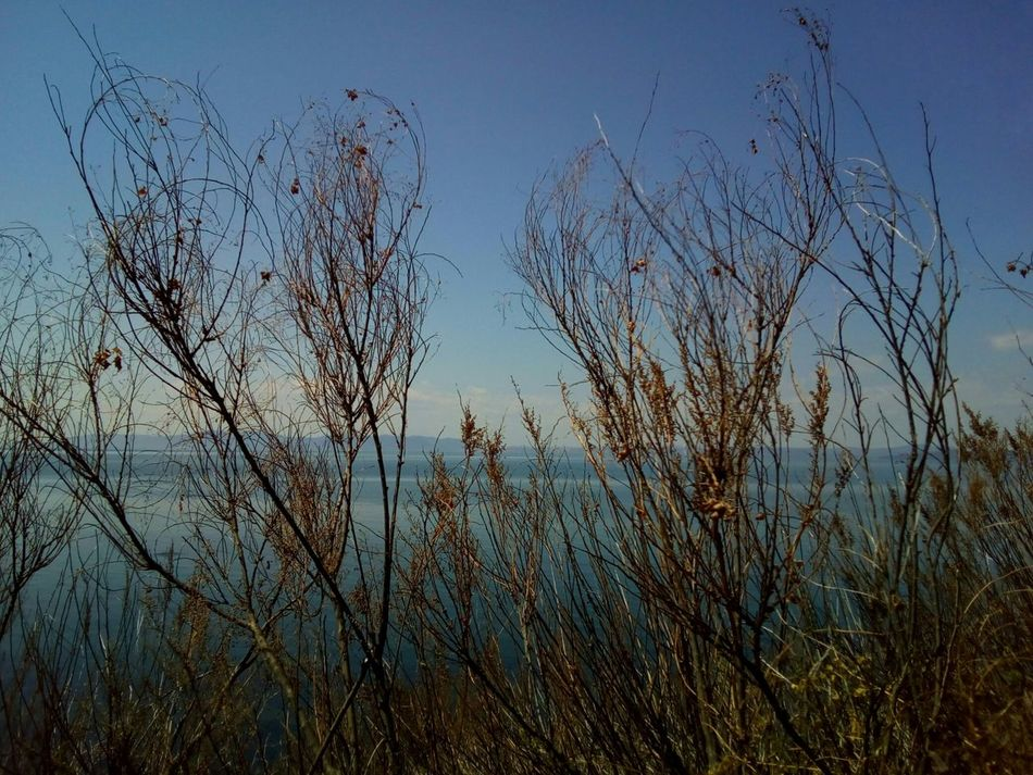 Beautiful stems against the sea and sky Silhouette Nature Plant Stem Stems Reeds Beauty In Nature Growth No People Day Close-up Sky Sea Blueness Spring
