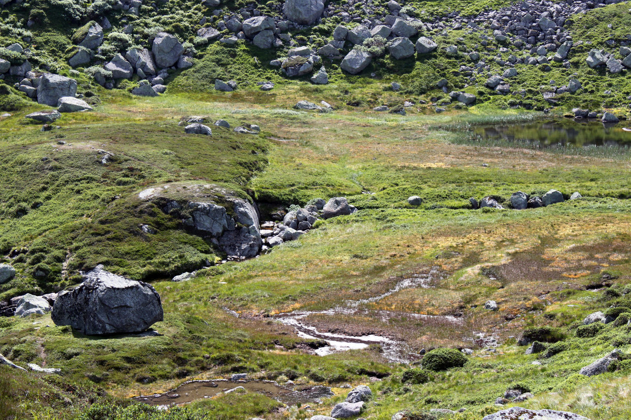 Hiking through the boggy moor in the highlands along Lysefjord, on the way to Kjeragbolten in Rogaland region, Norwegen Background Texture Bog Fjord Grass Highlands Hiking Kjerag Kjeragbolten Landscape Lonely Lysebotn Lysefjord Moor  Moss Nature No People Norway Outdoors Plateau Rock - Object Rogaland Scenery Scenics Swamp Wandering