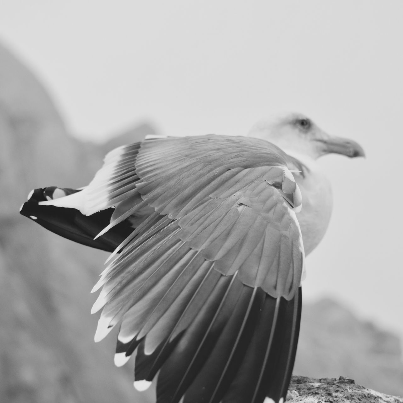 alFREED H. Beauty In Nature Hello World California Looking At Camera Bird Blackandwhite EyeEm Gallery Nature No People EyeEm Nature Lover Close-up Check This Out Birds_collection EyeEm Animals Calm EyeEm Best Shots California Coast Birds Black And White Black & White Wildlife & Nature Travel Destinations Outdoors Bird Photography