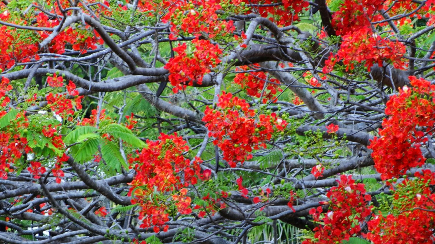 Flowerpower Redness Trees EyeEm Nature Lover Spectacular City Nature Tropical Paradise SexyCity