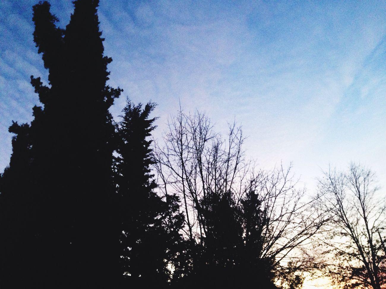 Tutto naturalmente bello Nature Threes Lepikiallariscossa Hello World