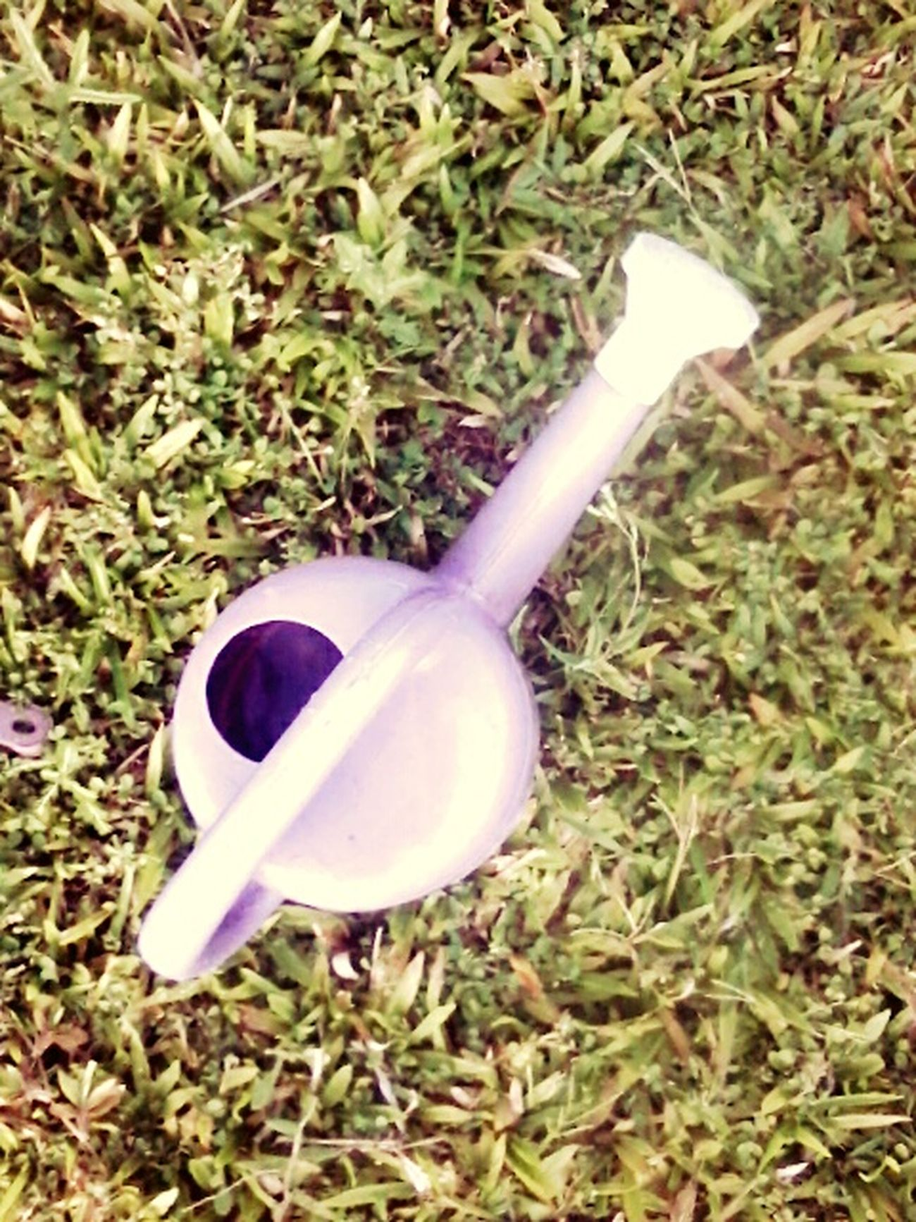 Sprinkler In Grass Light Violet Summertime Grass Taking Photos