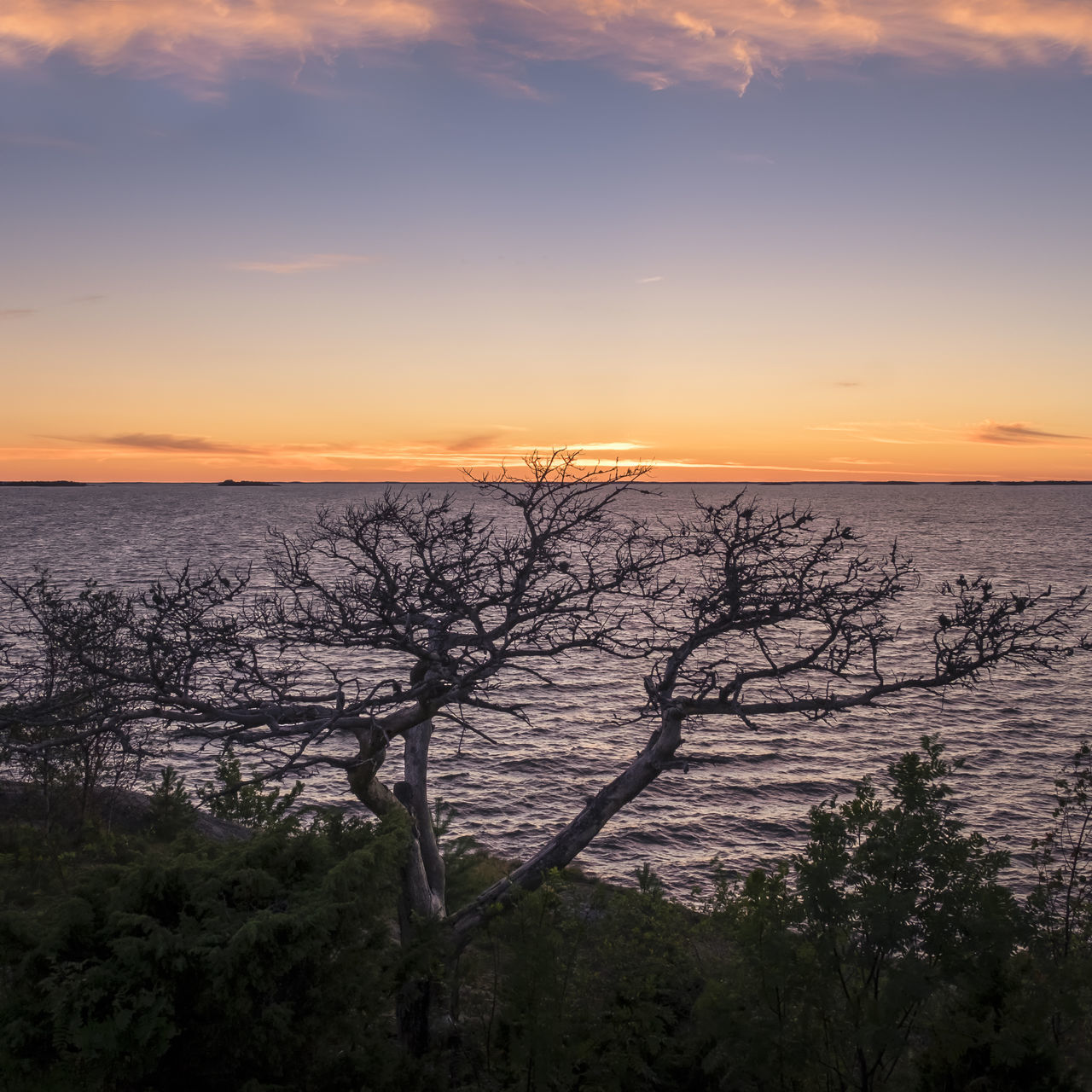 Scenic landscape at beautiful evening with single tree in southern Finland Beauty In Nature Blue Sky Branch Colorful Sky Colors Deadwood  Evening Horizon Over Water Idyllic Landscape Leafless Nature No People Outdoors Romantic Sky Scenics Sea Single Tree Sky Summer Summertime Sunset Tranquility Tree Water