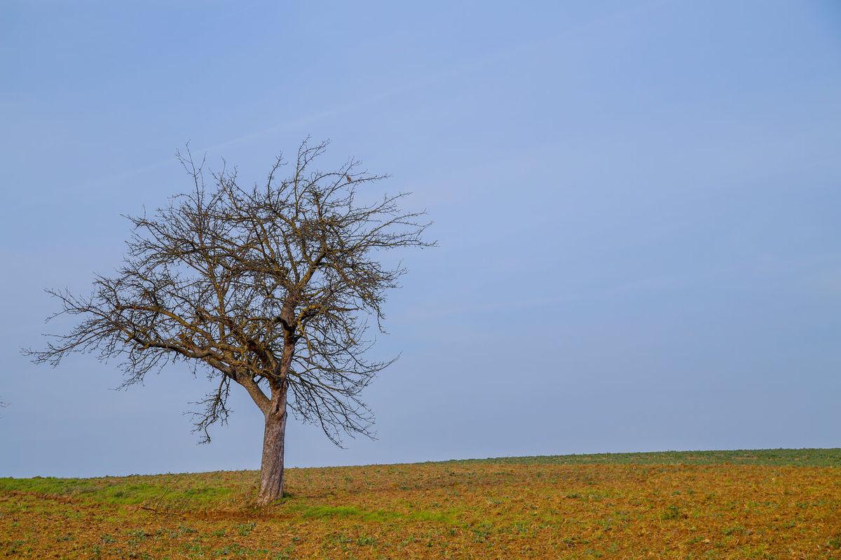 Solitario Nostalgic Landscape Landscape Nature Tree Lone Tree Albero Solitario Oxigen