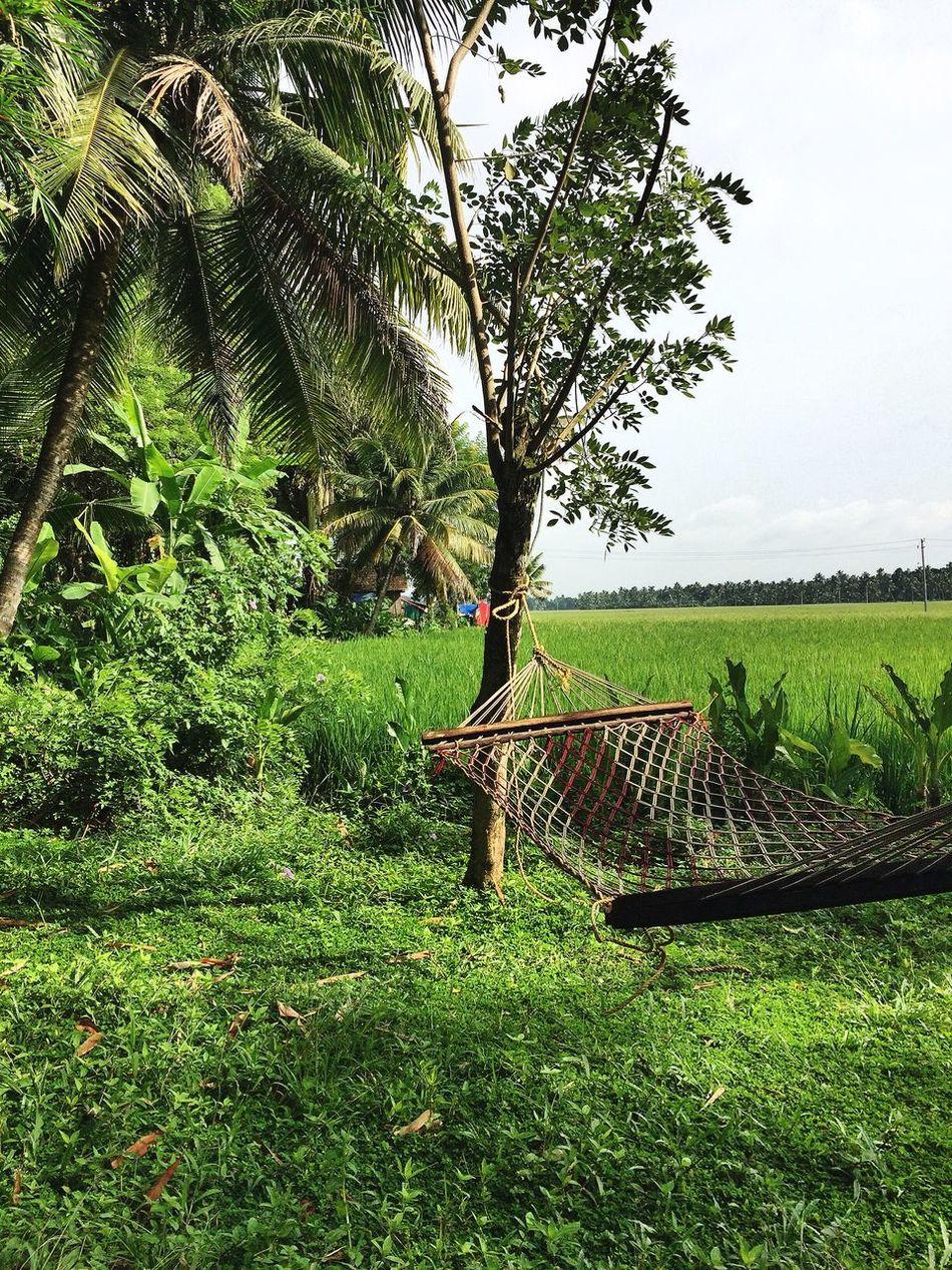 Tropical greenery of Kerala! India Kerala Hamak Palms Relaxing Relaxing Time Eyem Best Shots Nature EyeEm Nature Lover