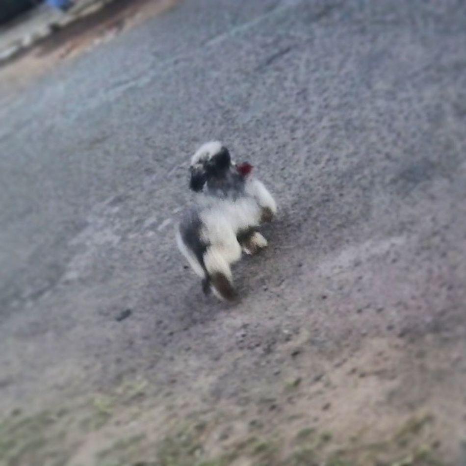 TBT  Fozi Ladygaga Crazy dog =X