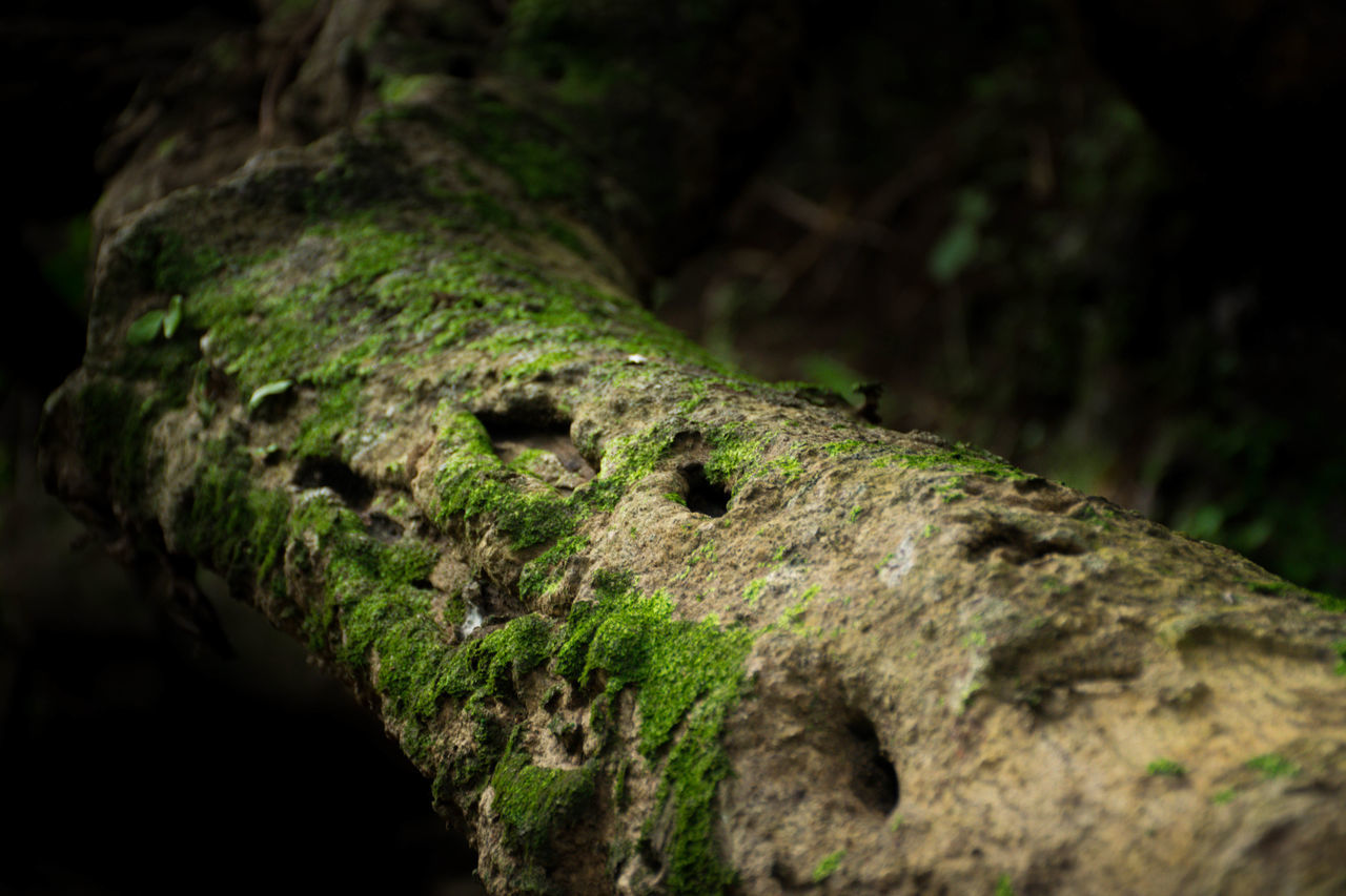 no people, moss, textured, close-up, rough, focus on foreground, day, outdoors, nature, tree trunk, animal themes