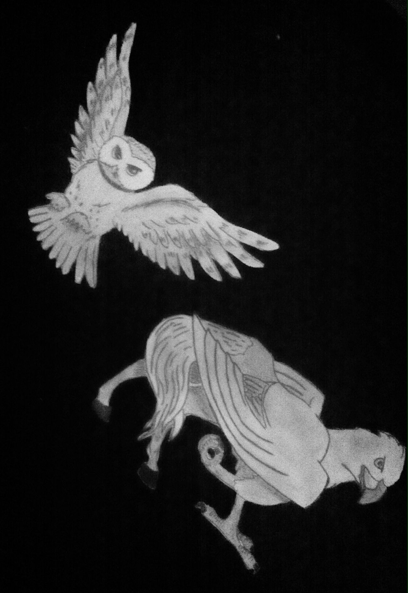 Hogwarts Owl Hippogriff Drawing