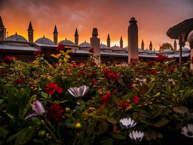 Dusk Flower Garden Graveyard Historic Spreading Sunset Turkey Miles Away Konya Turkey Mevlana Türbesi Miles Away The Secret Spaces