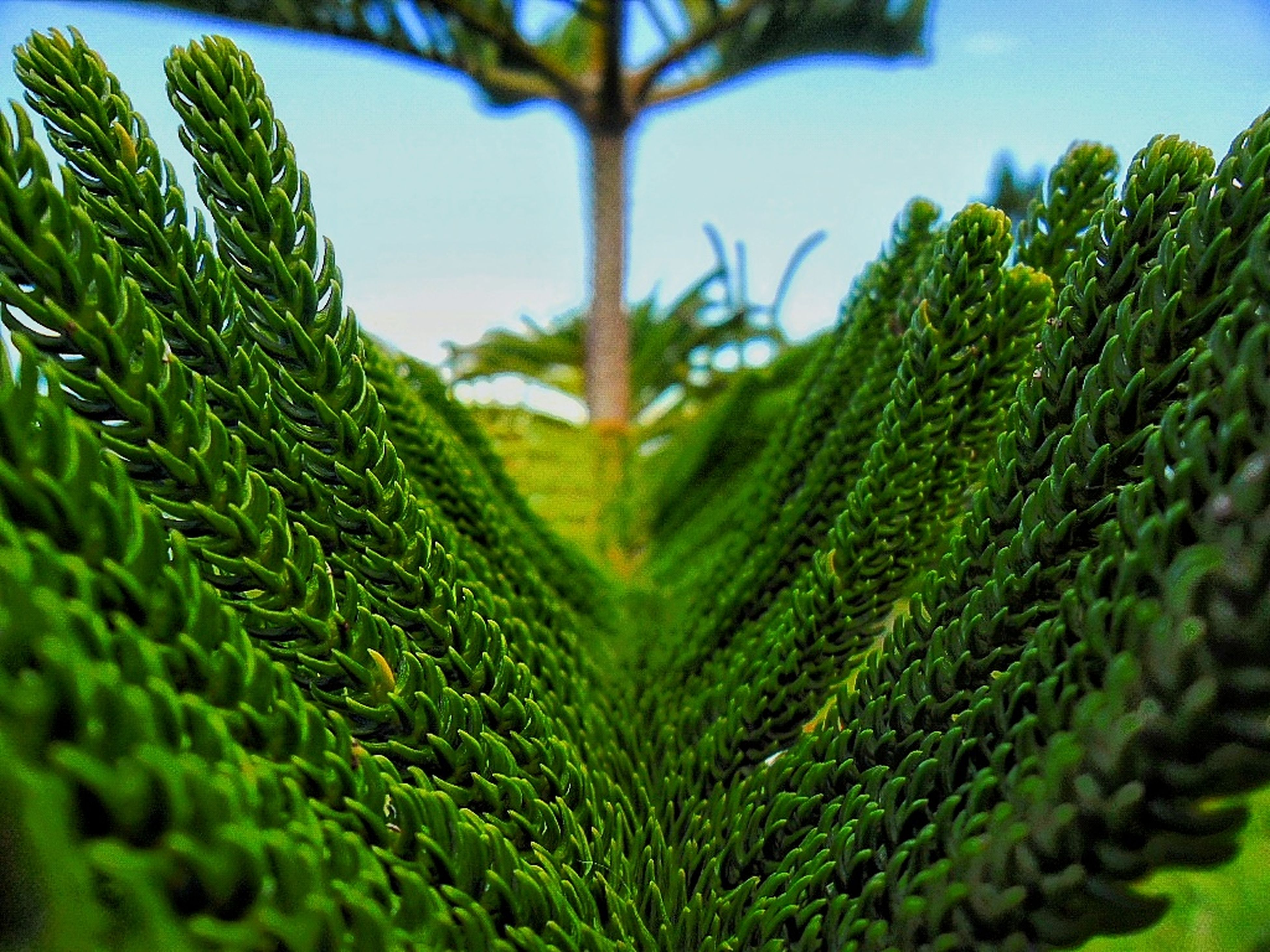 green color, growth, nature, beauty in nature, plant, no people, close-up, day, field, outdoors, freshness, sky, fragility