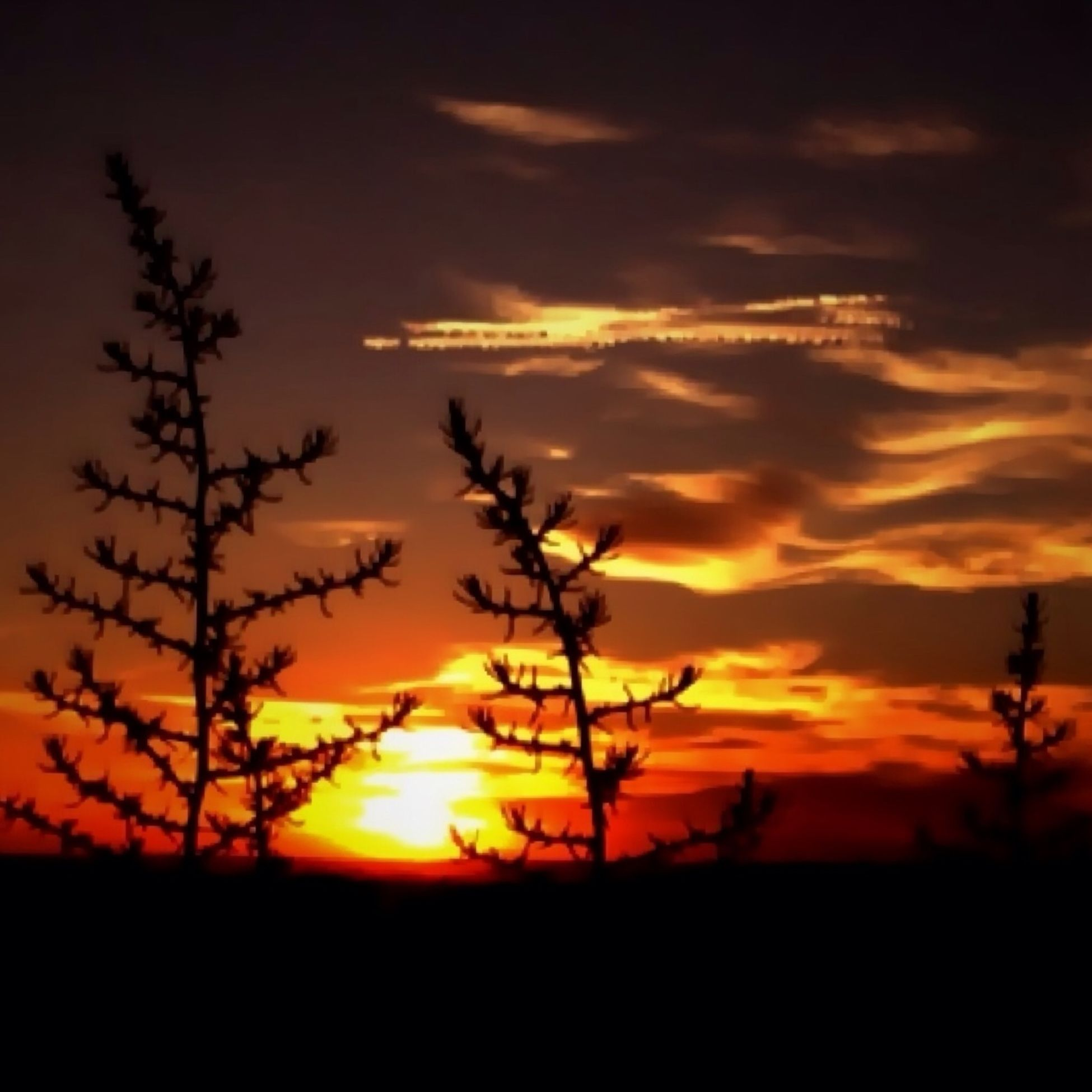 sunset, silhouette, orange color, sky, beauty in nature, scenics, tranquil scene, sun, tranquility, nature, idyllic, landscape, cloud - sky, dramatic sky, cloud, plant, field, growth, majestic, tree