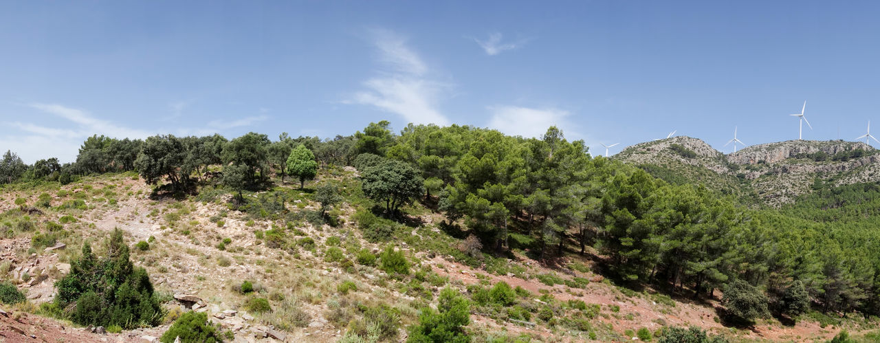 Barracas Beauty In Nature Castellón Day Landscape Nature No People Outdoors Plant Scenics Sky Tree