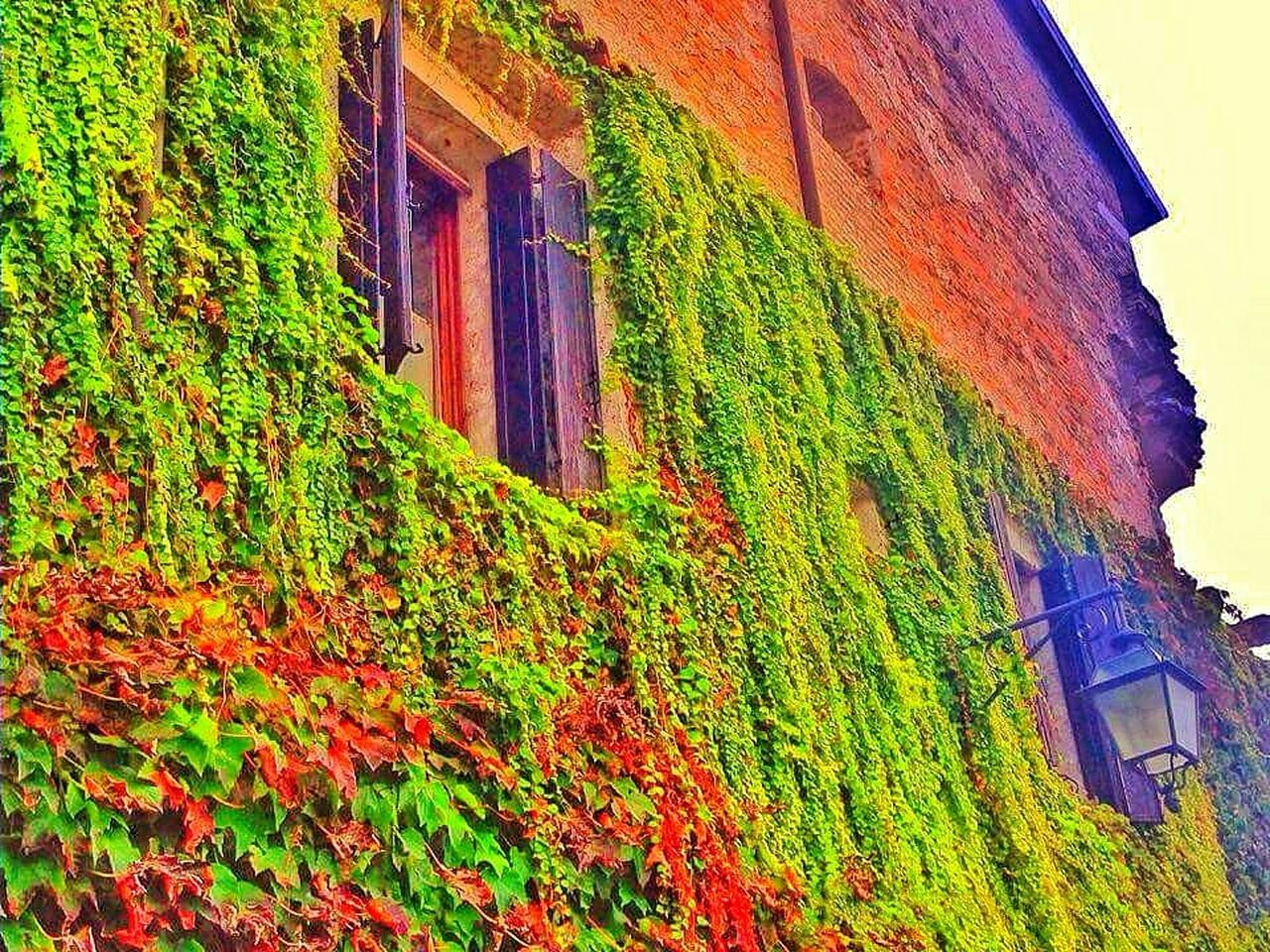 architecture, building exterior, built structure, house, low angle view, no people, outdoors, day, growth, window, plant, green color, nature, ivy, beauty in nature, sky