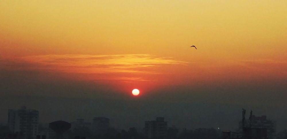 Sunrise - Dawn Bird Shades Of Orange
