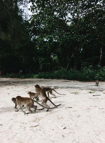 Monkey business EyeEm Nature Lover Outdoors Field Animal Themes Monkeys Langkawi Island Wild Animals Habitat Wildlife Wildlife Photography Wildlife & Nature Monkey Animals In Groups