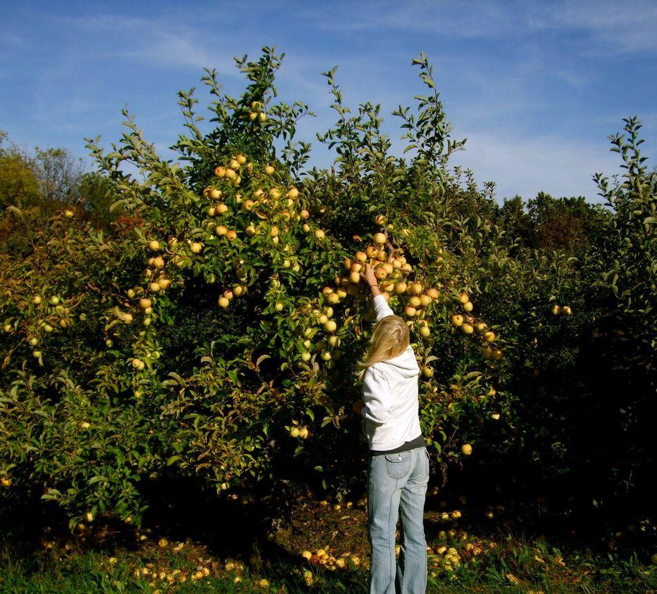 Beautiful stock photos of apple, 20-24 Years, Apple - Fruit, Apple Tree, Blond Hair