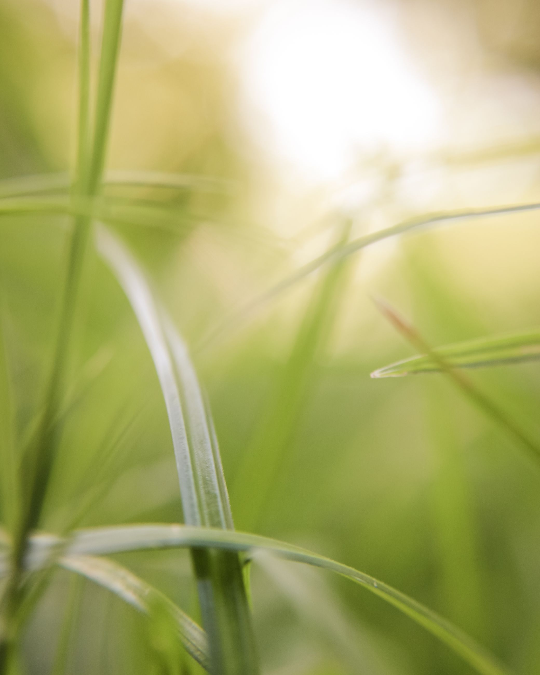 growth, plant, close-up, focus on foreground, nature, selective focus, fragility, grass, beauty in nature, blade of grass, green color, stem, outdoors, day, no people, tranquility, growing, green, botany, detail, sun, sunbeam, backgrounds