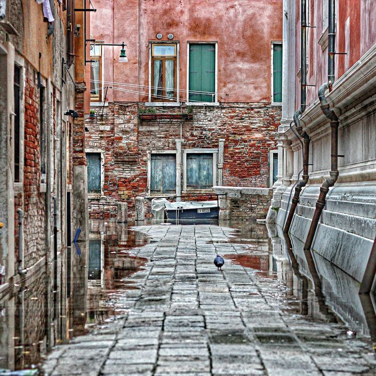 Venice, a Pigeon walk alone in high water (acqua alta) Acqua Alta Architecture Architecture_collection Architecturelovers Bad Condition Colorful Deterioration High Water Historical Building I Love My City Italy Narrow Old Architecture Old Buildings Piazza San Marco Venice,Italy Pigeon Bird  Ruined Venezia Water Reflection Water_collection Seeing The Sights Hidden Gems  unknown calle in Venezia, where tourist doesn't go Battle Of The Cities