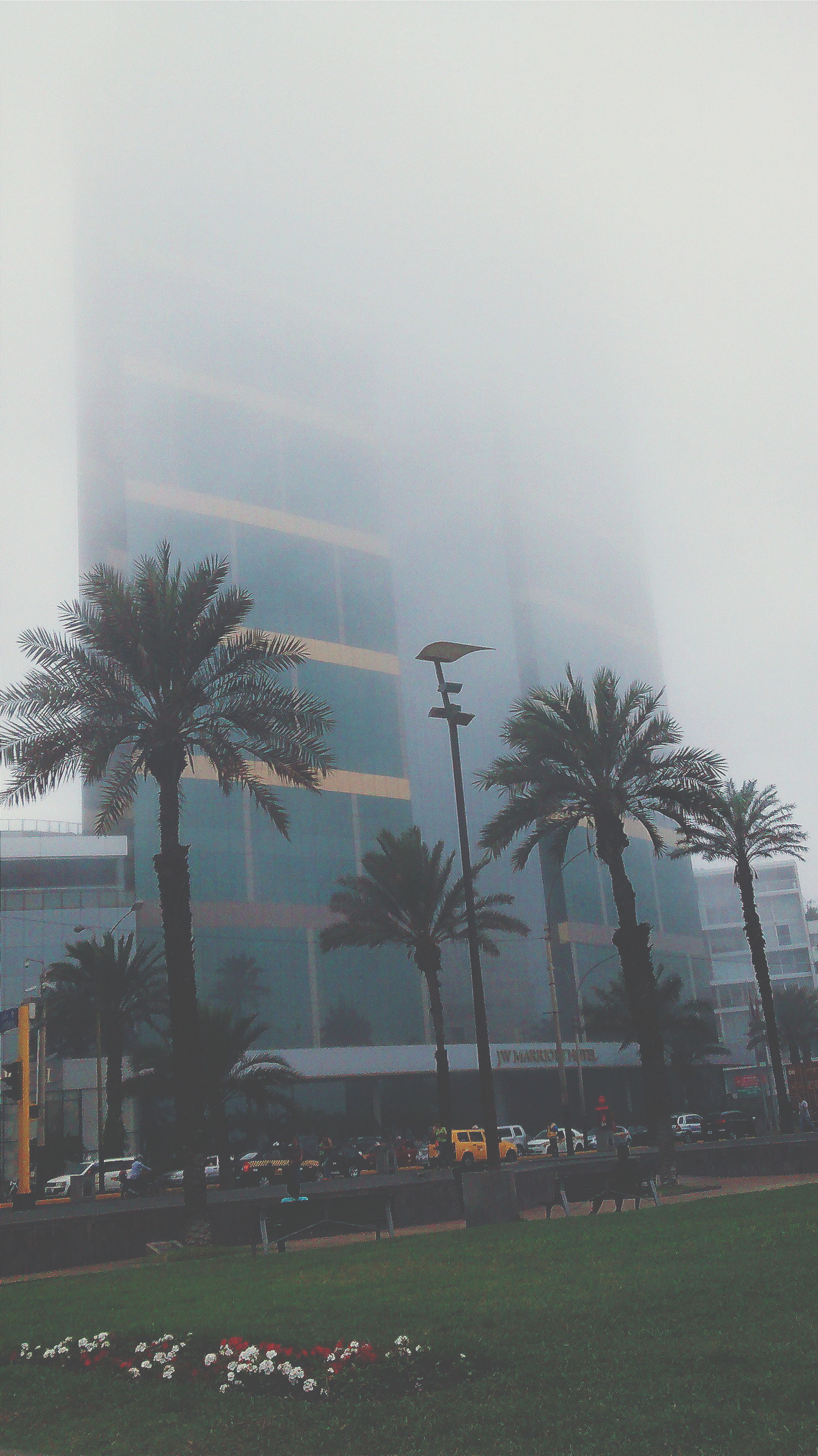 building exterior, architecture, built structure, tree, palm tree, sky, growth, fog, grass, city, foggy, nature, weather, outdoors, day, field, copy space, green color, building