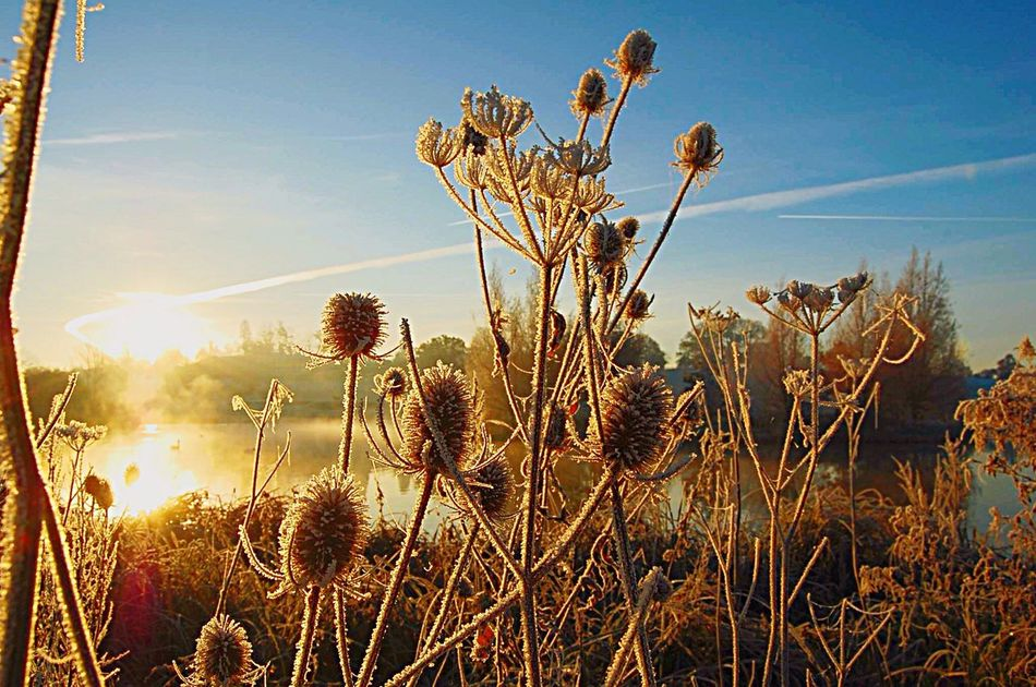 December mornings at college Lake View Nature Growth Plant Sky Sunlight Beauty In Nature Tranquil Scene No People Outdoors Scenics Tranquility Hartpury College Nature Aesthetic Sunrise Sunrise Over Water Sunrisesky.