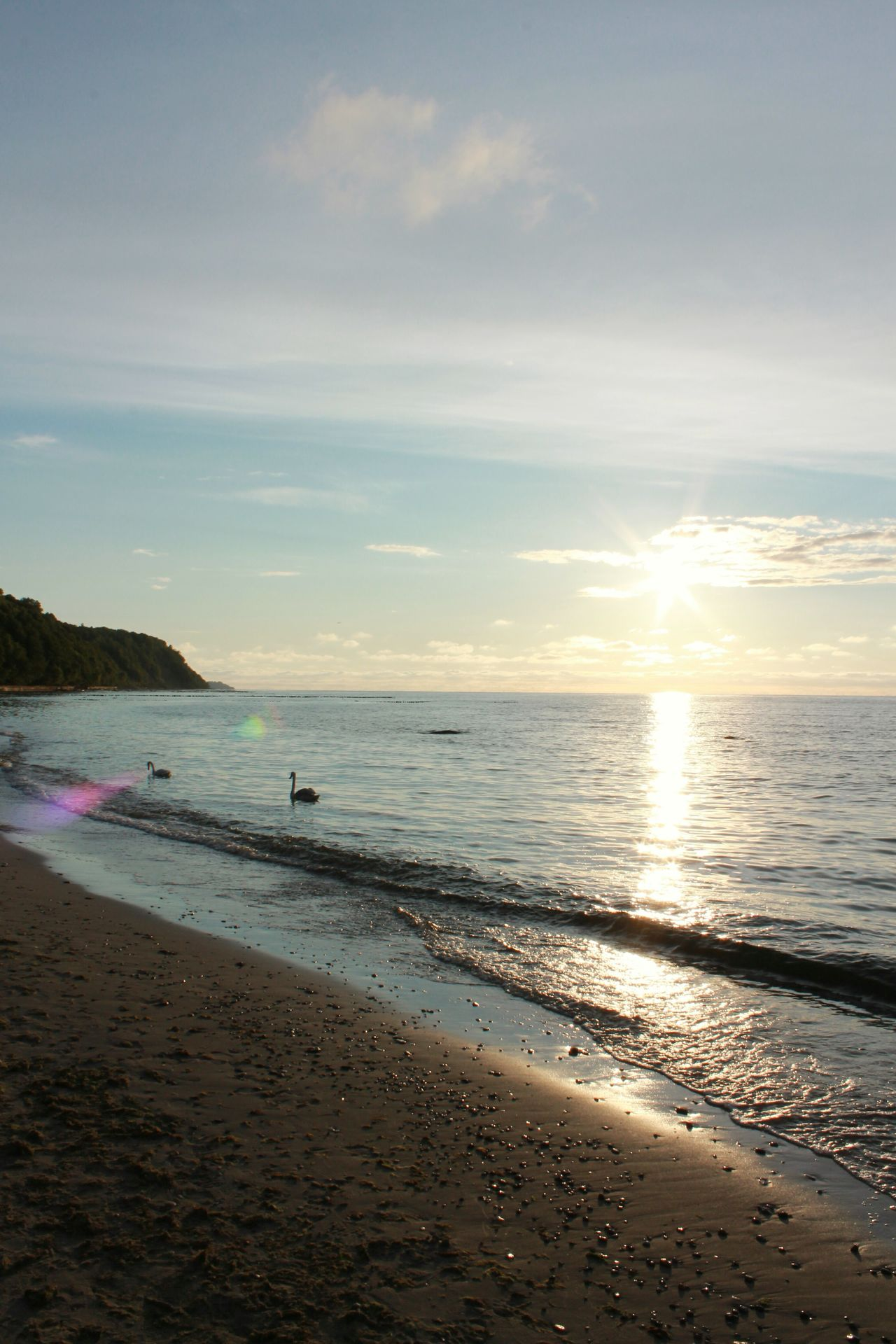 Sunset beach Sea Sea And Sky Blue Sky Harmony With Nature Hello World Awesome_view Paradise Swans Relaxing Moments Sunset Birds Wildlife Baltic Coast