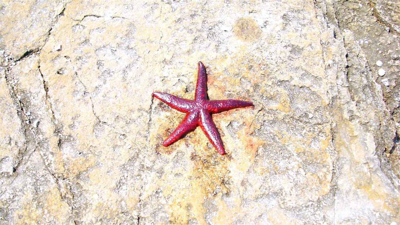 Beautiful stock photos of starfish, Animal Themes, Animals In The Wild, Aquatic, Day