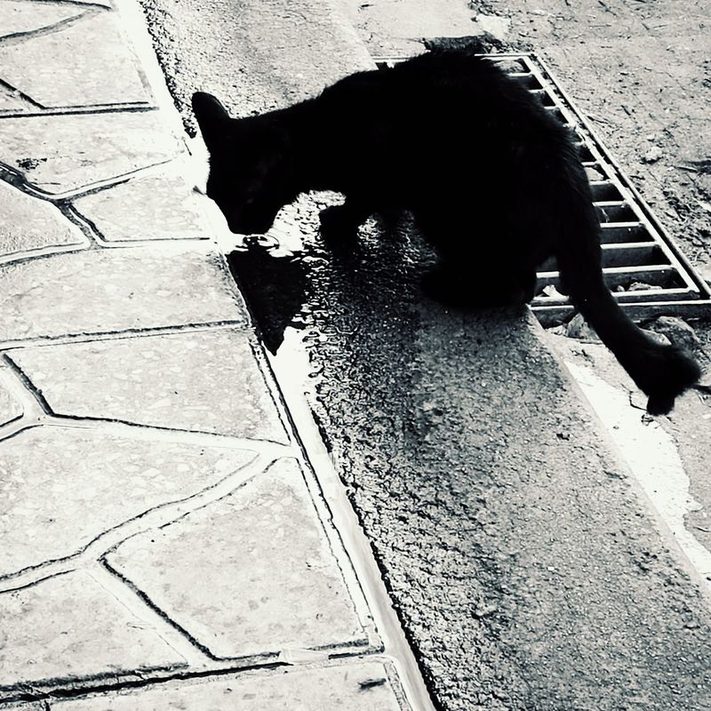 Cat drinking water. Outdoors Mammal Domestic Cat Animal No People Homeless Homeless Cat Homelessness  Homeless Animal Cat Homelessness  Homeless Cats Kitten Animalphotography Homeless Kitten HuaweiP9Photography Huawei P9 Plus Huaweiphotography Hua Wei P9 Plus HuaweiP9 Animal Themes Domestic Animals One Animal Pets