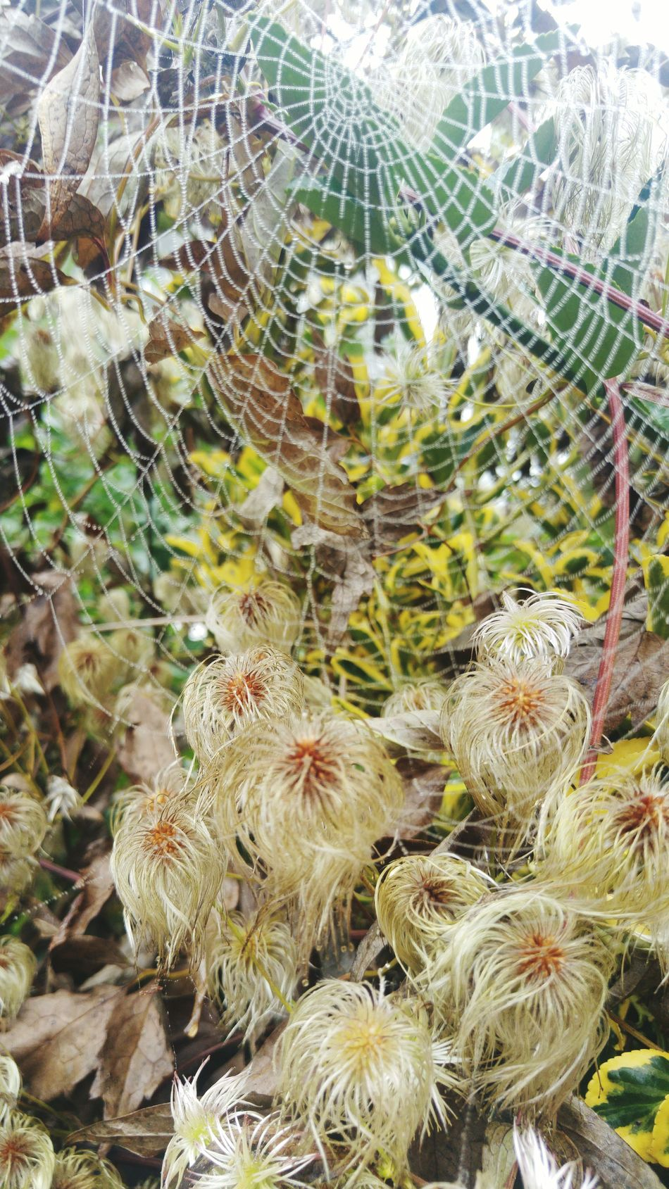 Nature Spidersweb Autumn🍁🍁🍁