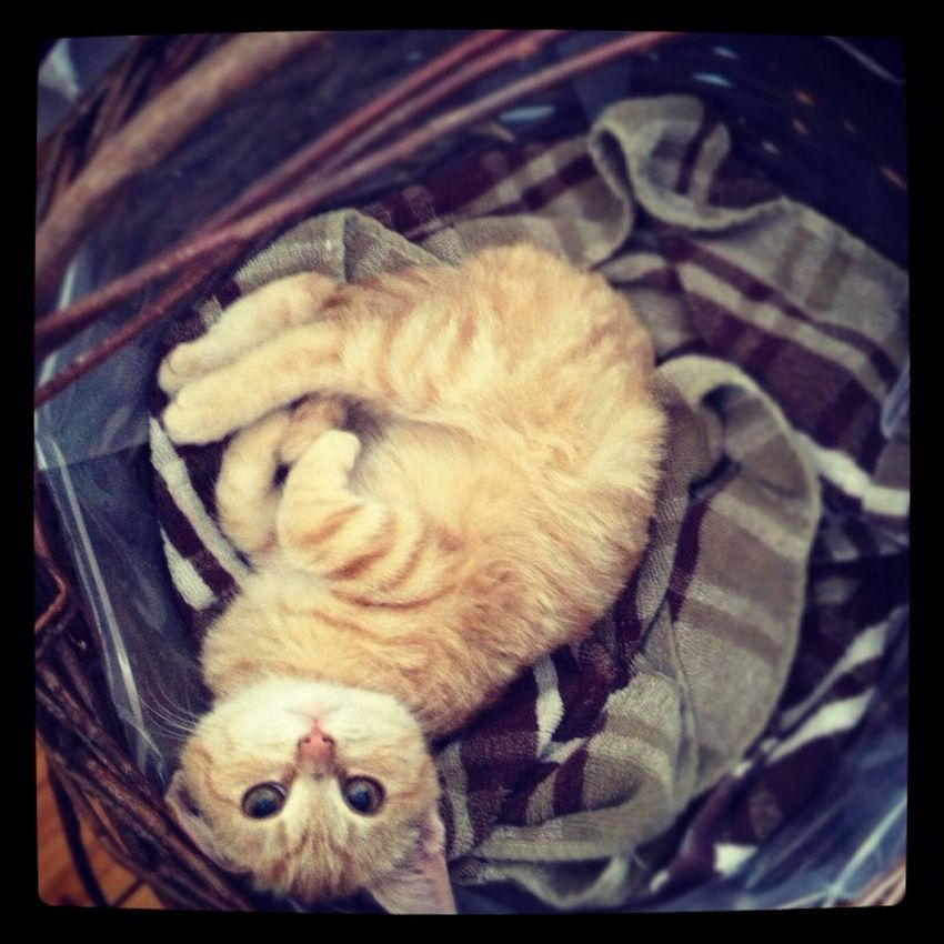 Tigerlou My Cat