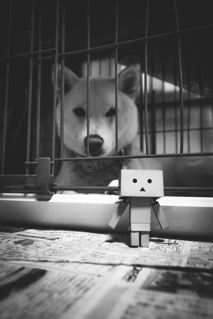 Danbo Dog Toys Shades Of Grey Monochrome EyeEm Best Shots - Black + White Summer Dogs Animal Cute Toy Photography