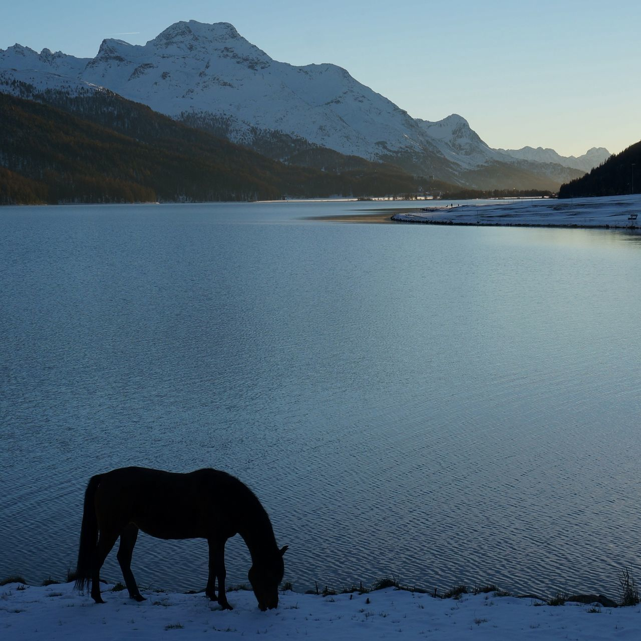 What remains of the day Engadin Corvatsch Horses Lake LakeSilvaplana Margna SilsMaria Mountain Range Swiss Alps PreciousMoments Switzerland Tranquility