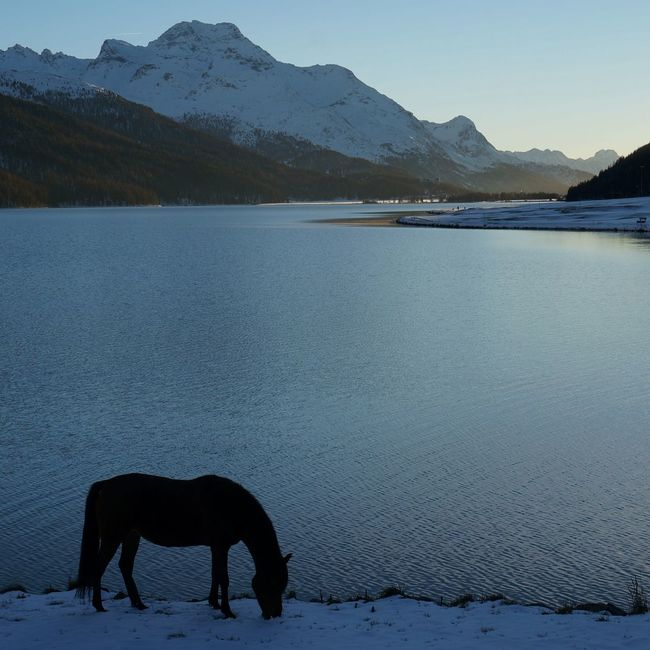 What remains of the day Engadin Corvatsch Horses Lake LakeSilvaplana Margna SilsMaria Mountain Range Swiss Alps PreciousMoments Switzerland Tranquility