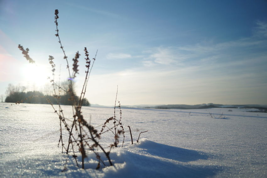 Cold Temperature Focus On Foreground Nature Sky Snow Winter Sachsen Mittelsachsen Oederan