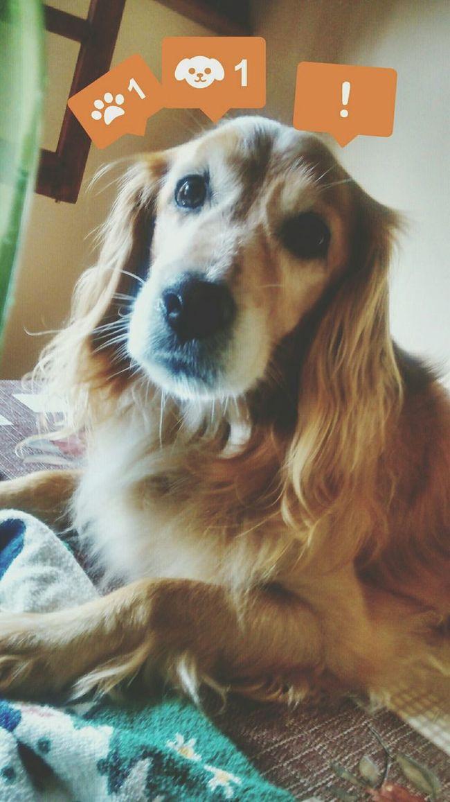 Argentina Hi! My Love❤ Dog❤ I Love My Dog My Baby Beautiful ♥ GiddyLizer
