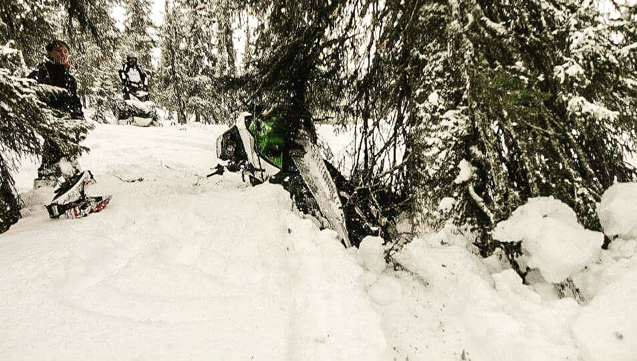 Tree Snow Outdoors Trees Are For Traction Rss Skidoo First Eyeem Photo